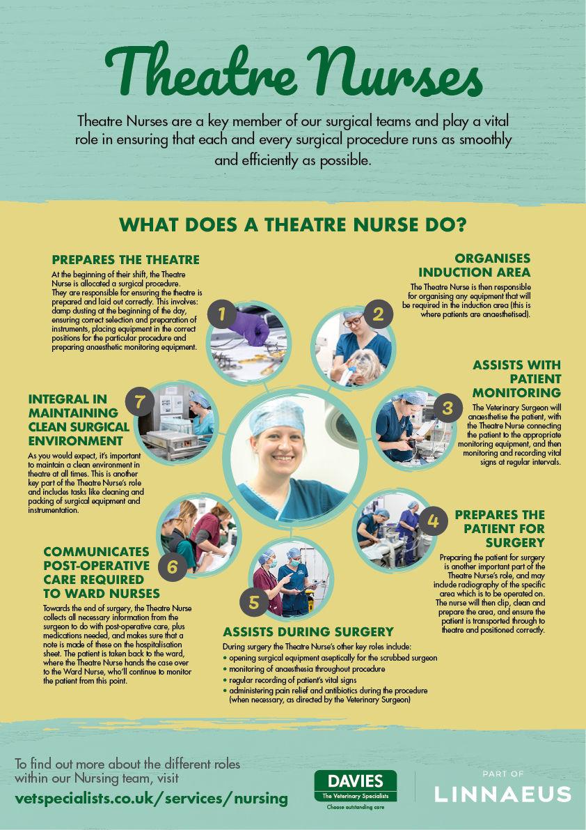 Davies Veterinary Specialists Theatre Nurse infographic
