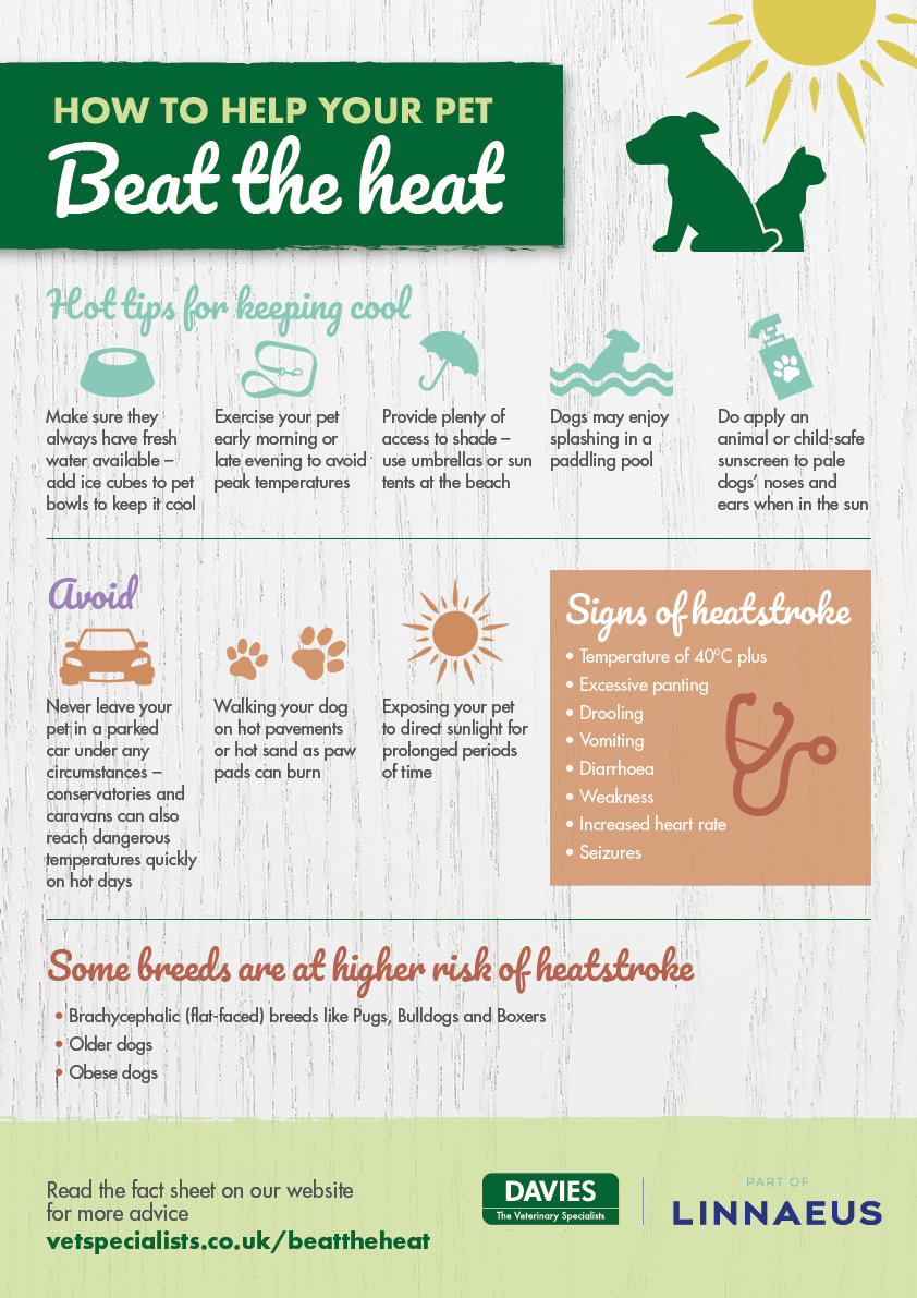 Davies Veterinary Specialists Summer Health tips for pets
