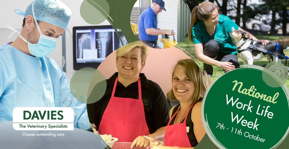 Davies Veterinary Specialists are celebrating Work Life Week 2019