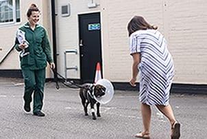 Dog regains sight after cataract surgery