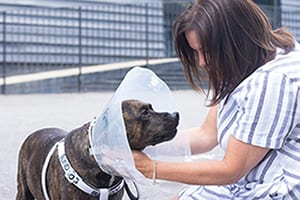 Dog undergoes surgery to remove cataracts