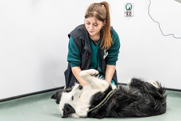 Davies Veterinary Specialists Veterinary Nursing in lockdown blog