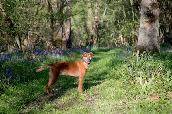 Davies Veterinary Specialists Distance challenge