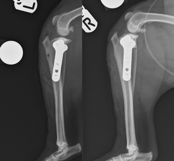 Davies Veterinary Specialists Orthopaedics TPLO surgery