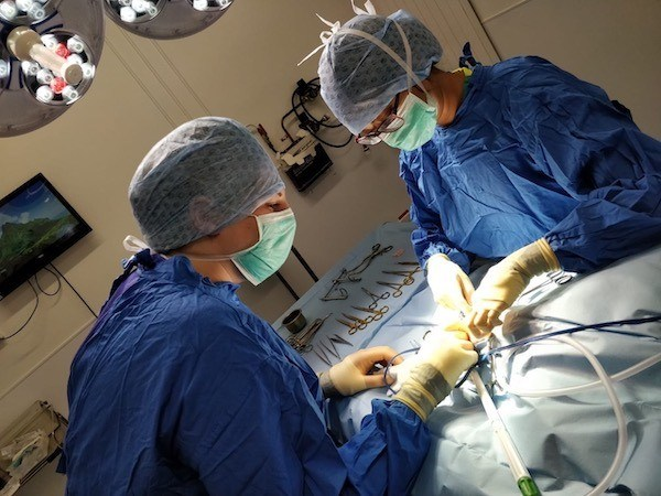 Davies Veterinary Specialists Boomerang has hernia surgery - soft tissue team at work