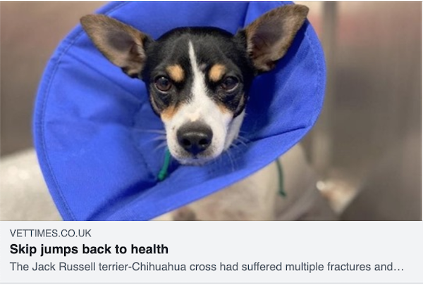 Davies Veterinary Specialists Skip article in Vet Times