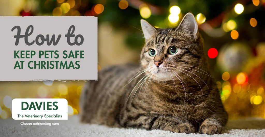 Davies Veterinary Specialists Christmas Hazards for pets and how to avoid them
