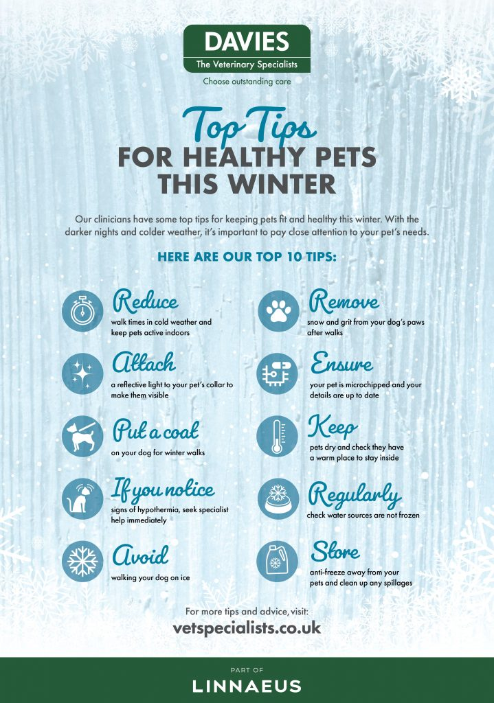 Davies Veterinary Specialists Top Tips for Healthy pets this winter