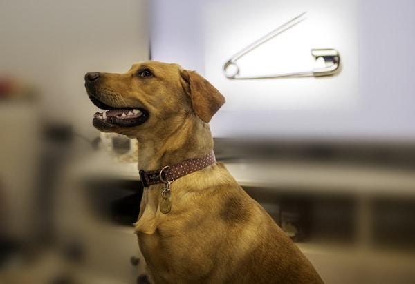 Davies Veterinary Specialists Endoscopy case study