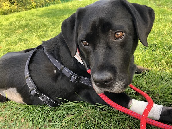Monty made a full recovery after treatment at Davies