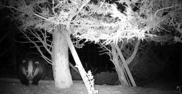 Davies Veterinary Specialists wildlife camera trap