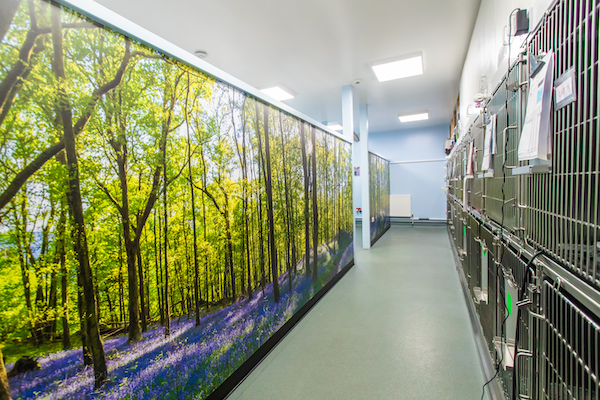 New calming forest vinyls to help reduce anxiety amongst hospitalised cats at Davies Veterinary Specialists